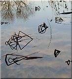 TQ1372 : Emergent vegetation, River Crane by Stefan Czapski