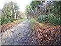 TQ5336 : Ayttons Wood by Chris McAuley