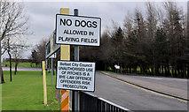 """J2883 : """"No dogs"""" sign, Mallusk, Newtownabbey by Albert Bridge"""