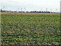 TF4404 : Two types of fenland farming by Richard Humphrey