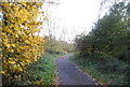 SU8852 : Blackwater Valley Path in Hollybush Park by N Chadwick