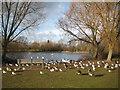 TL1696 : Orton Longueville: Osier Lake (2) by Nigel Cox