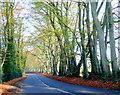 SZ0397 : Arrowsmith Road by Nigel Mykura