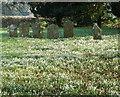 SU1015 : Snowdrops, St George's Churchyard by Maigheach-gheal