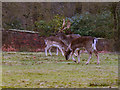 SJ7386 : Deer Sanctuary, Dunham Park by David Dixon