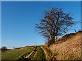 NS3662 : Hawthorn Tree and Track by wfmillar