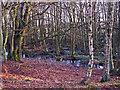 NS9892 : Birchwood near Cadgerford by William Starkey