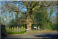 TQ4963 : Oak tree at the junction by Robin Webster