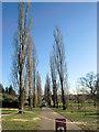 TQ3095 : Poplars Down in Oakwood Park, London N14 by Christine Matthews