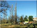 TQ3095 : Poplar trees down, Oakwood Park, London N14 by Christine Matthews