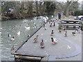 SP2512 : Burford Ducks by Gordon Griffiths