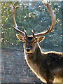 SJ7386 : Stag's Head by David Dixon