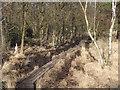 SU9853 : Boardwalk, Whitmoor Common by Colin Smith