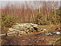 SU9853 : Whitmoor Common, Log Pile by Colin Smith