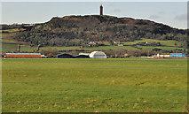 J4972 : Grass, Newtownards Airport by Albert Bridge