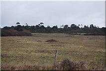 SY5088 : Farmland behind Cogden Beach by N Chadwick