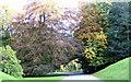 NU1713 : Hulne Park by Christine Westerback