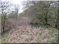 SU5182 : Dense vegetation by Bill Nicholls