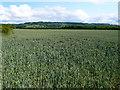 SP0637 : Fields near Buckland Fields by Nigel Mykura