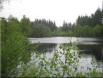 NX4465 : Little Bruntis Loch, looking west by Ann Cook