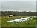TQ4561 : Horse and snow patch by Robin Webster