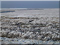 TF4133 : The Wash coast in winter - Hoar frost on the marsh by Richard Humphrey