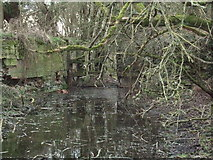 SU1998 : Derelict lock, disused Thames and Severn Canal by Vieve Forward