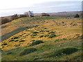 ST4635 : Grassland, with windmill, Walton Hill, Polden Hills, Somerset by Ruth Sharville