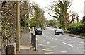 J3784 : The Shore Road, Jordanstown/Greenisland (5) by Albert Bridge