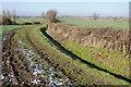 SO7606 : Headland track by Philip Halling