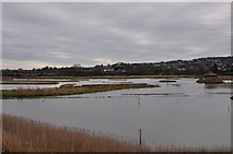 SY2591 : East Devon : Salt Marshes by Lewis Clarke