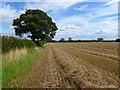 NZ2014 : Farmland, Aldbrough by Andrew Smith