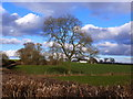 ST5091 : Winter tree from the roadside near Hayes Gate, Crick by Ruth Sharville