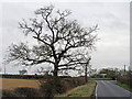 TL9401 : Winter Oak by Roger Jones