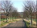 TQ5265 : Lane near Eynsford by Malc McDonald