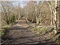 NY6392 : The Lakeside Way at Kielder Viaduct by Oliver Dixon