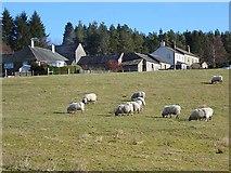 NY6491 : Gowanburn Farm by Oliver Dixon