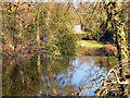SJ8382 : River Bollin, Styal Estate by David Dixon