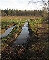 ST0907 : Clearing, Downlands Plantation by Derek Harper