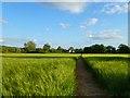 SP8004 : Farmland, Princes Risborough by Andrew Smith