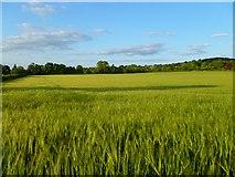 SP8104 : Farmland, Princes Risborough by Andrew Smith
