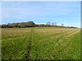 SP8802 : Farmland, Great Missenden by Andrew Smith