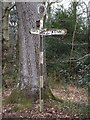 SX9383 : An ancient signpost at Exeter Lodge by David Smith