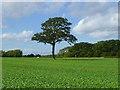 SU3090 : Farmland, Uffington by Andrew Smith