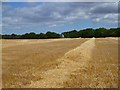 SU4075 : Farmland, Welford by Andrew Smith