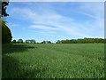 SU3850 : Farmland, St Mary Bourne by Andrew Smith