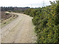 SU2017 : Gorse near Millersford Plantation by Maigheach-gheal