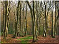 SU6883 : Woodland, Stoke Row by Andrew Smith