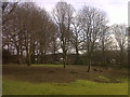 SJ7661 : Sandbach park - felled trees by Stephen Craven