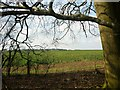SU5178 : View towards Cheseridge Farm by Fly